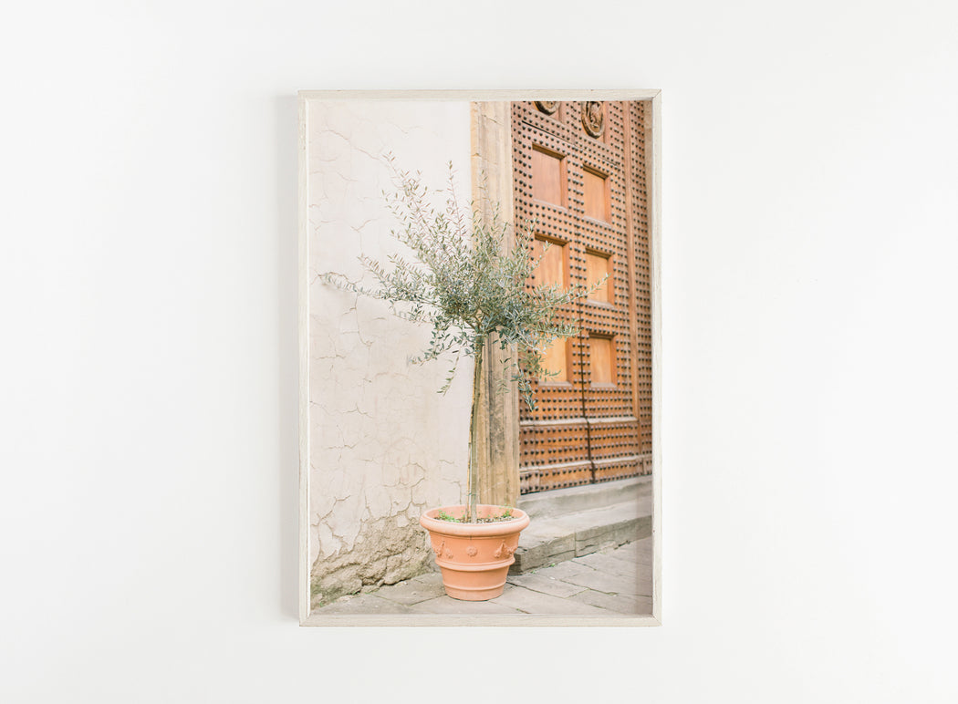 olive tree in the city print