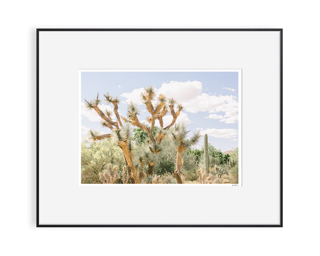 joshua tree landscape photography wall art nature print