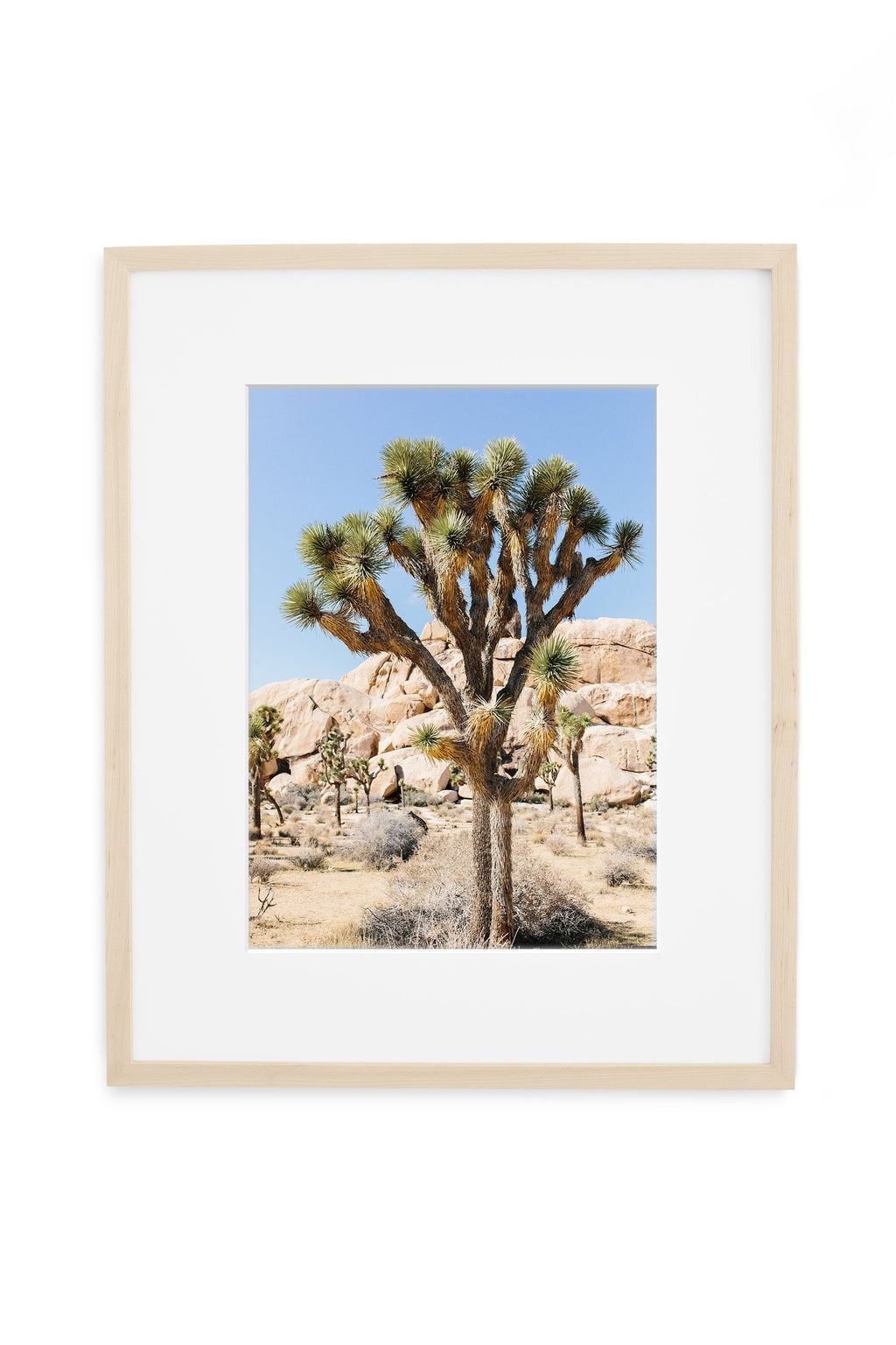 print of one joshua tree