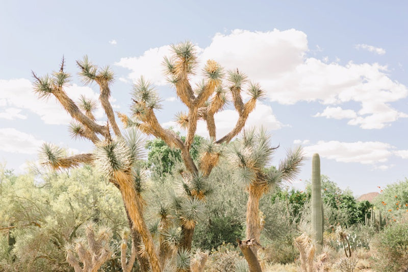 joshua tree wall art photography print photo
