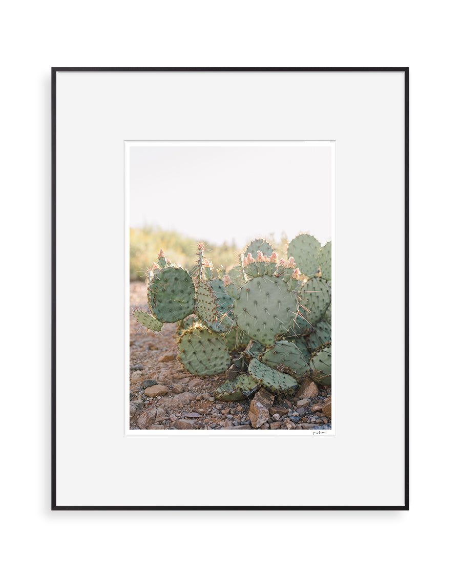 prickly pear 00