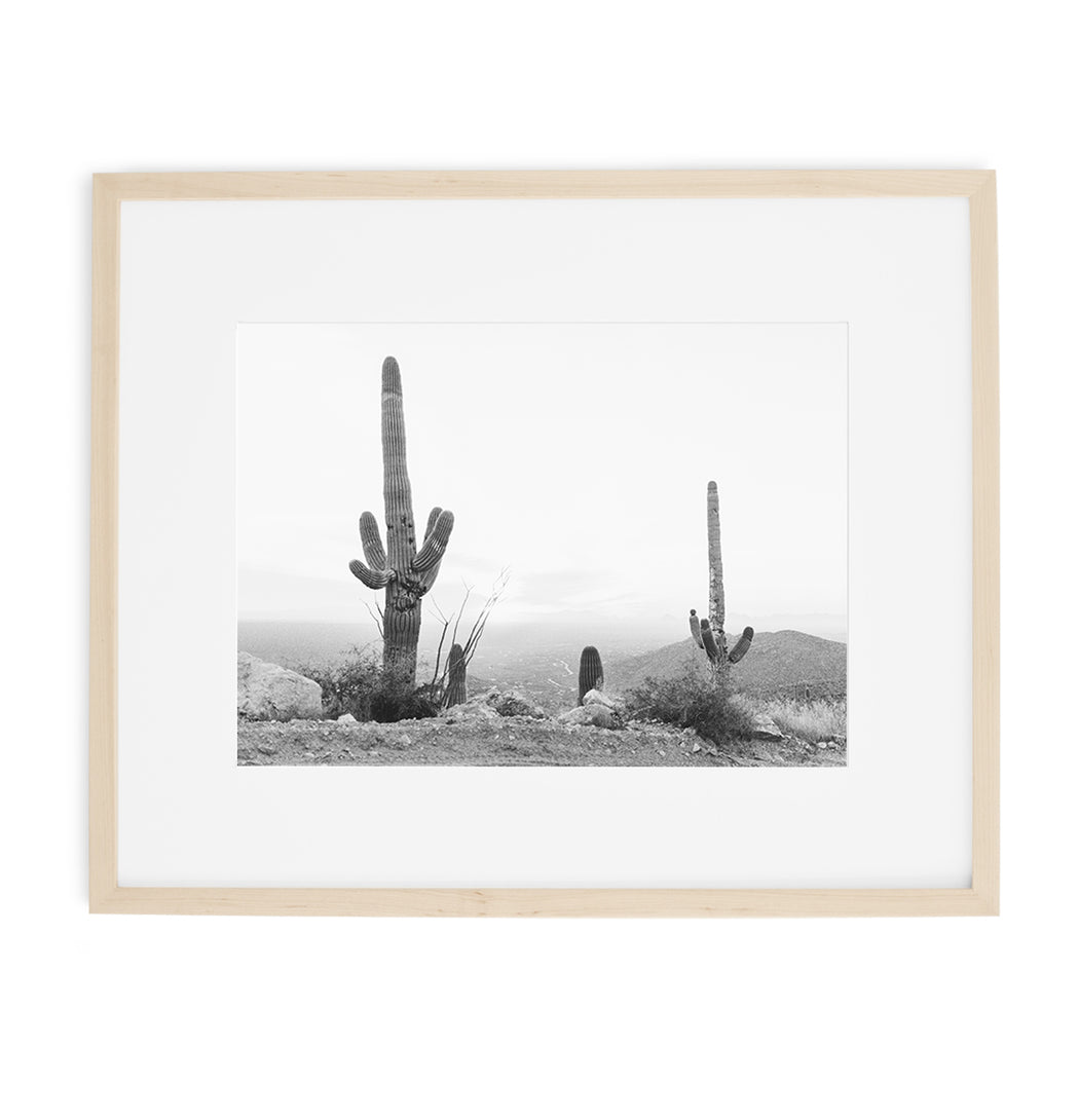black and white cactus print of arizona saguaros