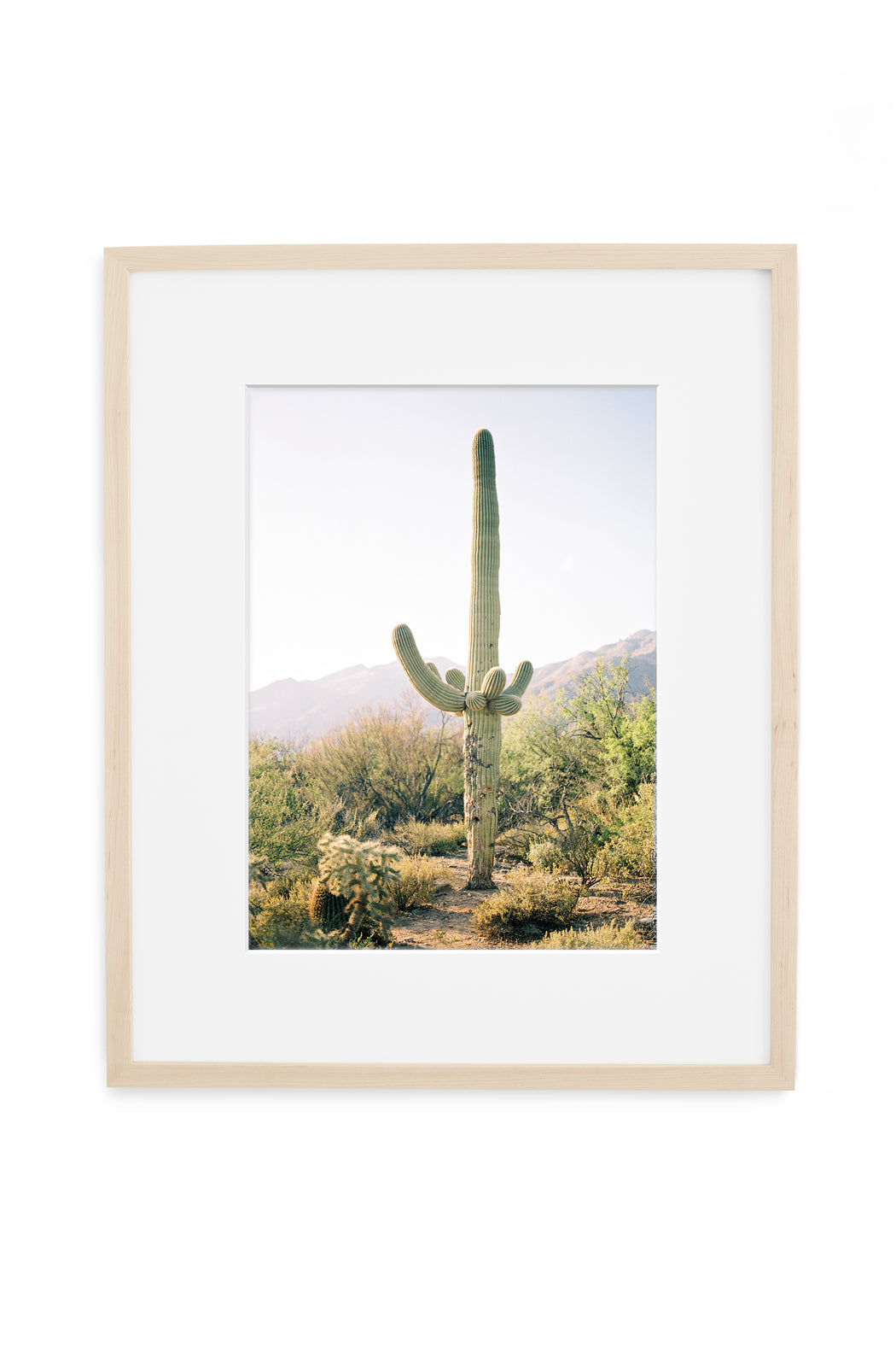 tucson arizona saguaro cactus film photography print