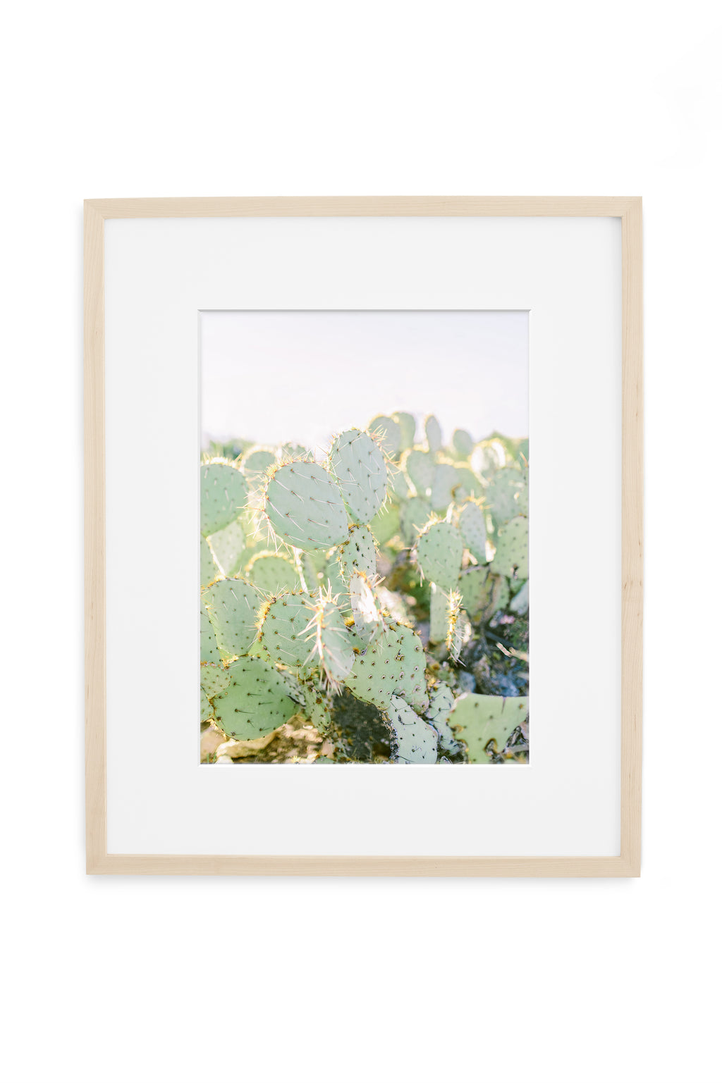 prickly pear cactus botanical print