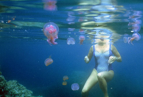 Don't let Jellyfish ruin your Spring or Summer Vacation!