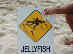 Painful Jelly Fish Sting