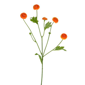 orange aster flower