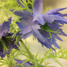 close up of blue nigella silk flower