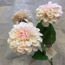 3 pink and cream zinnia dahlia in vase