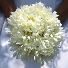 ivory silk wedding bouquet of ivory gerbera