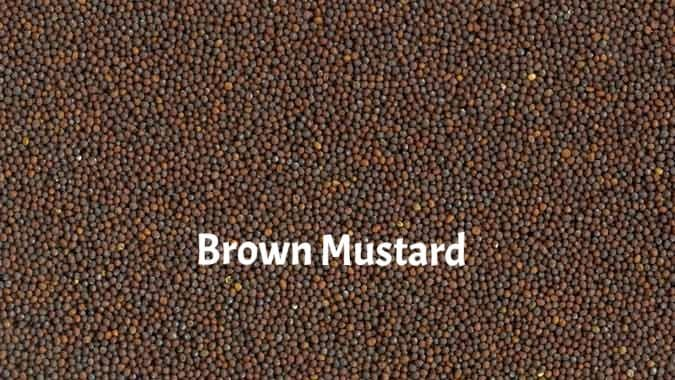 Brown Mustard Seeds for Sprouting for Exotic Birds