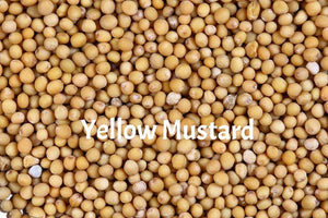 Yellow Mustard Seeds for Sprouting for Exotic Birds