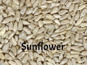 Sunflower Seeds for Sprouting for Exotic Birds