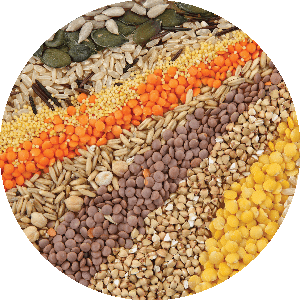 Seeds (& Grains) for Sprouting & Pre-Sprouted