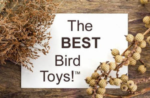 Natru-Toys!™ Economical Foraging by The Best Bird Toys®