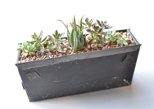 Check out this Interesting Take on a Succulent Garden!