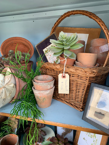 Wicker basket filled with terra cotta pots with succulents.