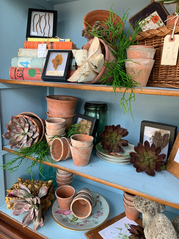 Various small terra cotta pots with succulents and small cast concrete birds on a shelf in a cute cabinet.