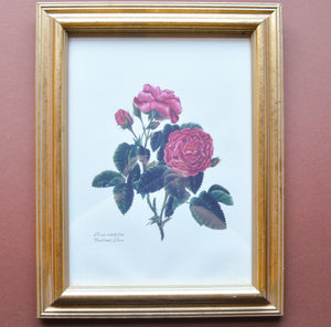 Framed Floral Prints