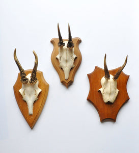 Grouping of three small roe deer with antlers on wood plaques