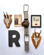 Photo of European Roe Deer Antler on Plaque in a Gallery Wall