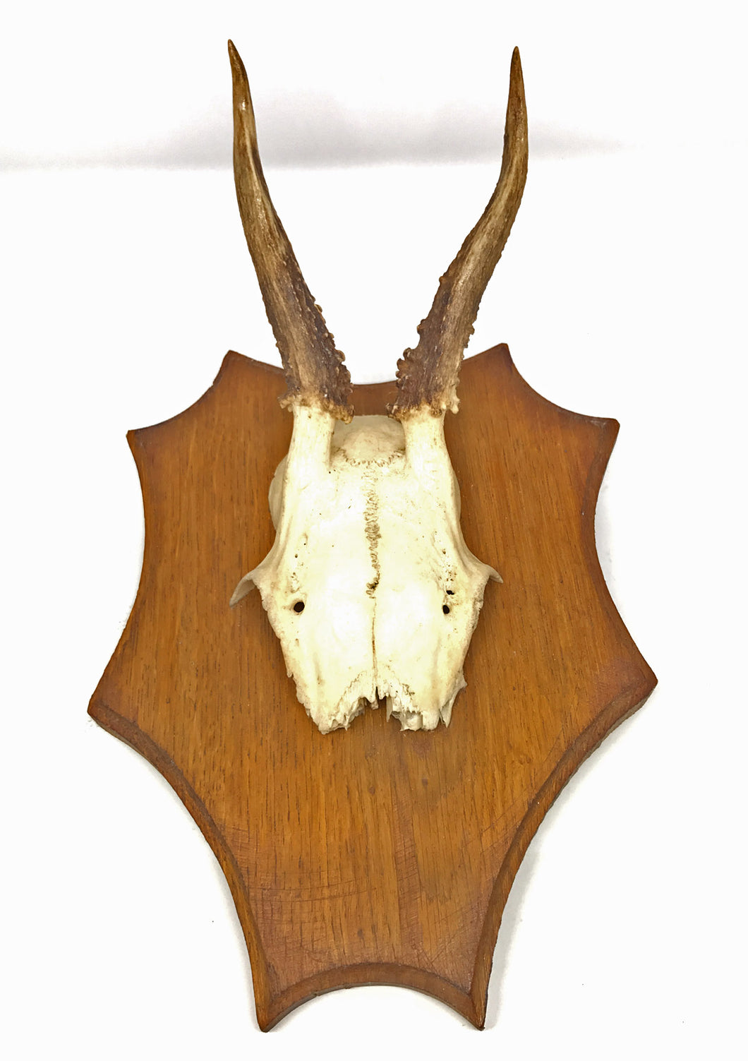 Small Roe Deer with Antlers on Plaque