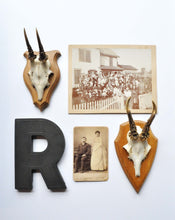 Gallery Wall with European Roe Horn on Wood Plaque