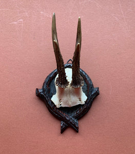 Roe Horns on Resin Backing with Cross Bottom