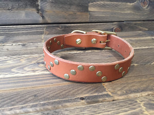 "'HELIX' LEATHER Rivet Dog Collar  1"" - Whiskey Tan"