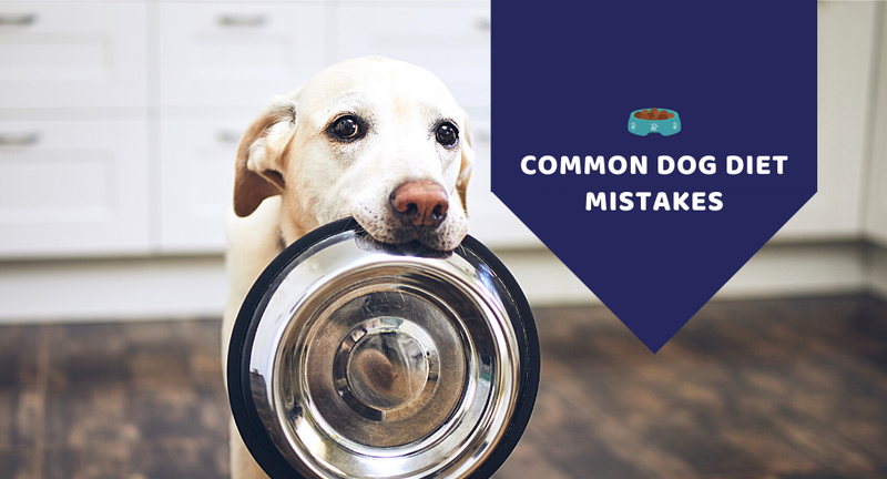 Common dog diet mistakes