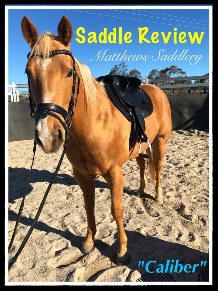 SADDLE REVIEW