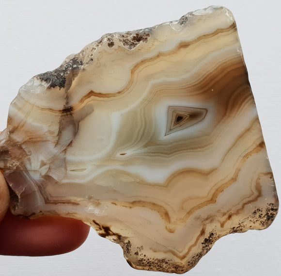 Natural Agate Slices - Medium