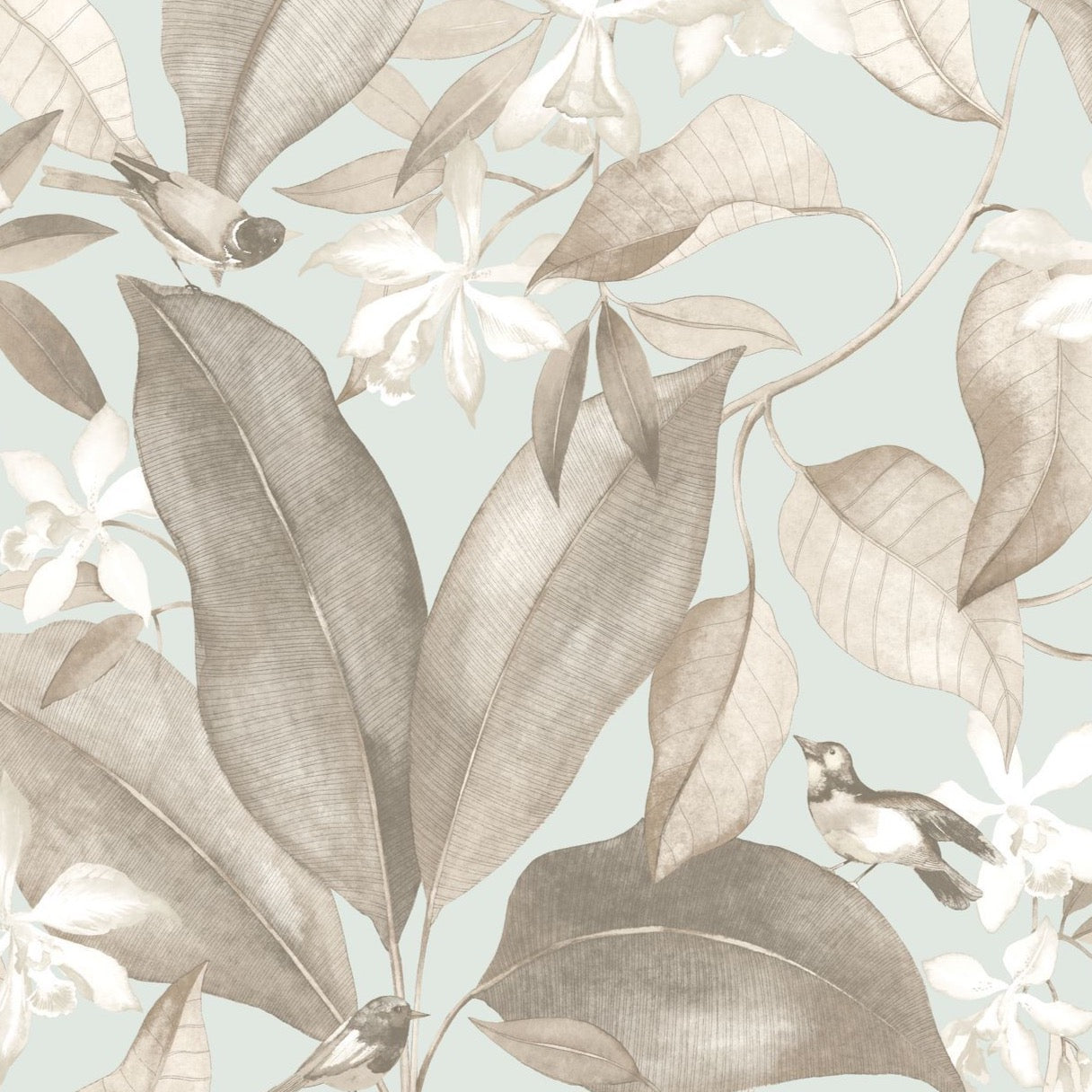 DELICACY- BIRDSONG  - DELY85382261 Taupe/Azul