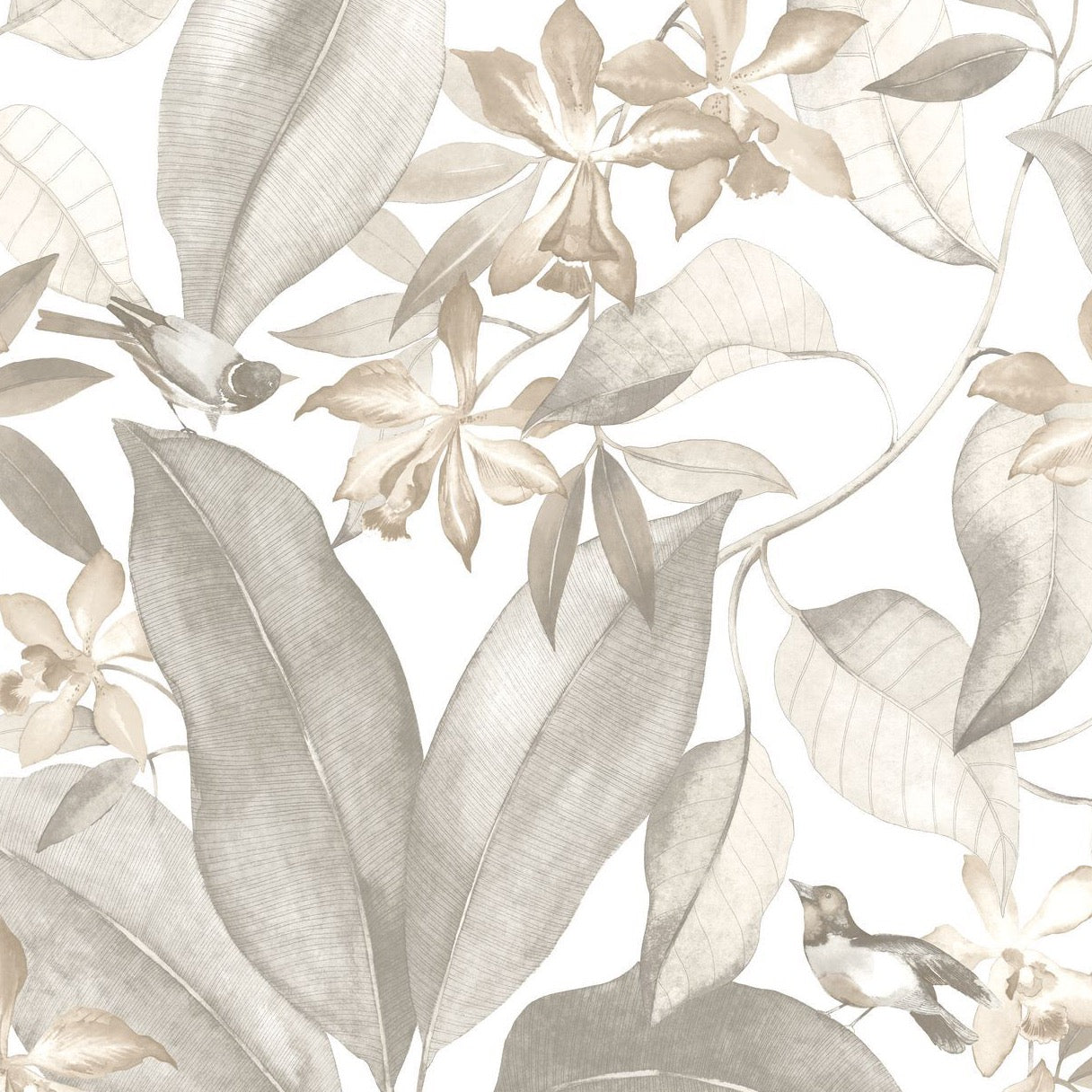 SO WHITE 4 - Birdsong - 85389242 Taupe