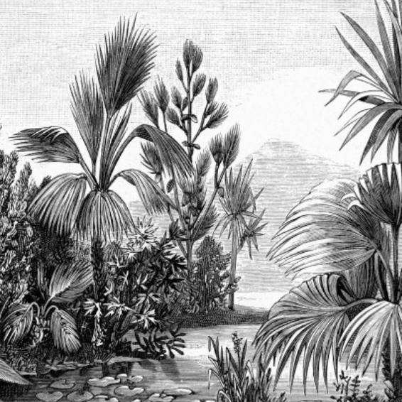 Mural/Painel PARADISE -  Jungle Engraving EH158953