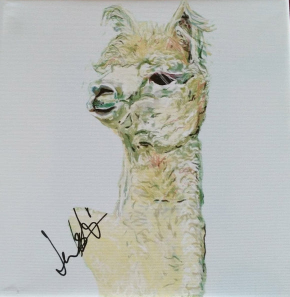 Alpaca Print on Canvas by Lisa WB