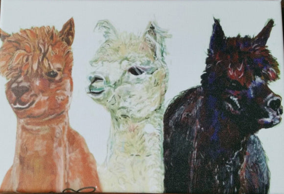 Alpaca Trio Print on Canvas by Lisa WB