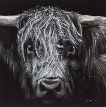 Box Canvas Print Dark Hamish Highland Cattle 40cm x 40cm Boxed