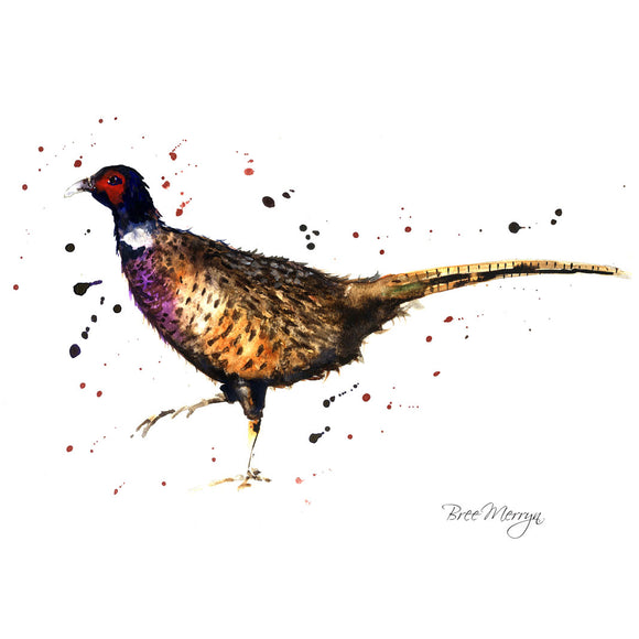 Box Canvas Print Phil Pheasant 40cm x 40cm
