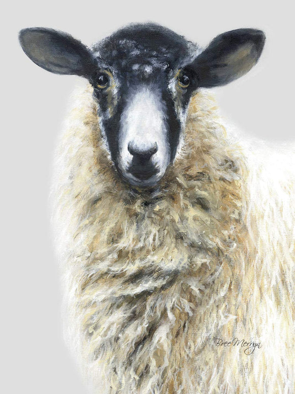 Bree Merryn Shelley Sheep Canvas Cutie