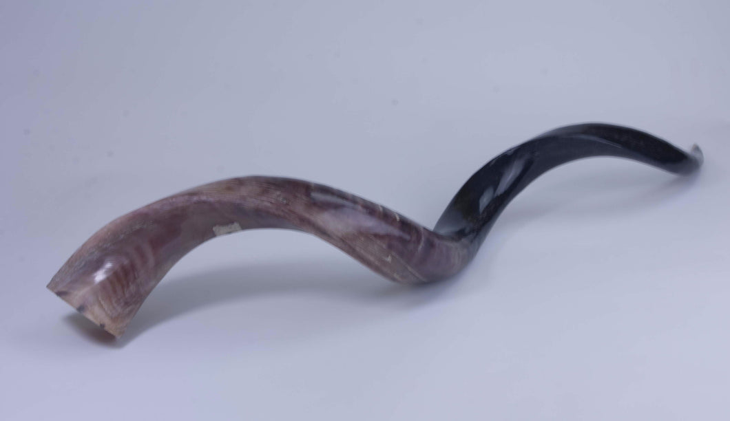 Medium Polished Kudu Horn (G1288)
