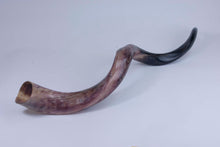 Medium Polished Kudu Horn (1024-PM-G1289)