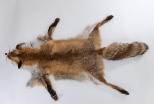 Red Fox Skin with Feet (G2516)