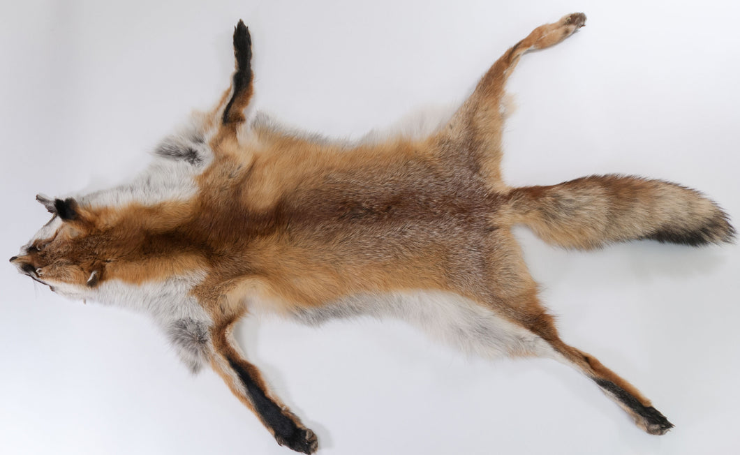Red Fox Skin with Feet (G2518)