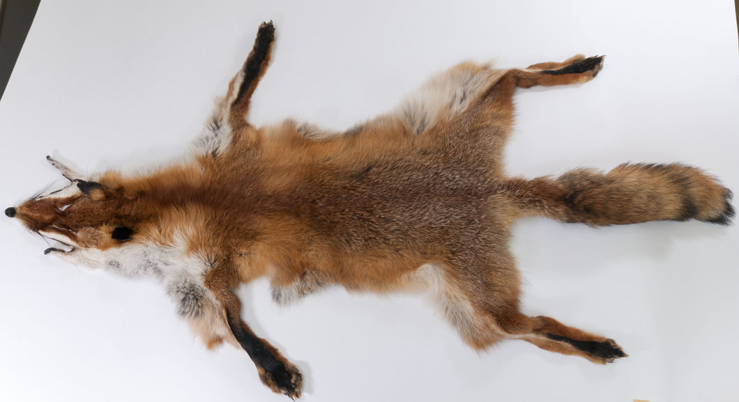 Red Fox Skin with Feet (G2519)