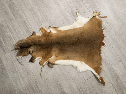 White Tail Deer Skin #1 Quality (39-01-G4304)