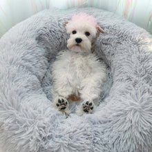 Load image into Gallery viewer, Fluffy Pet Bed - For Small and Medium Dog or Cat