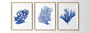 Print of seaweed in blue accents
