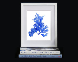 Print of seaweed in blue III