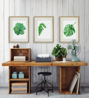 Print of a fiddle leaf botanical